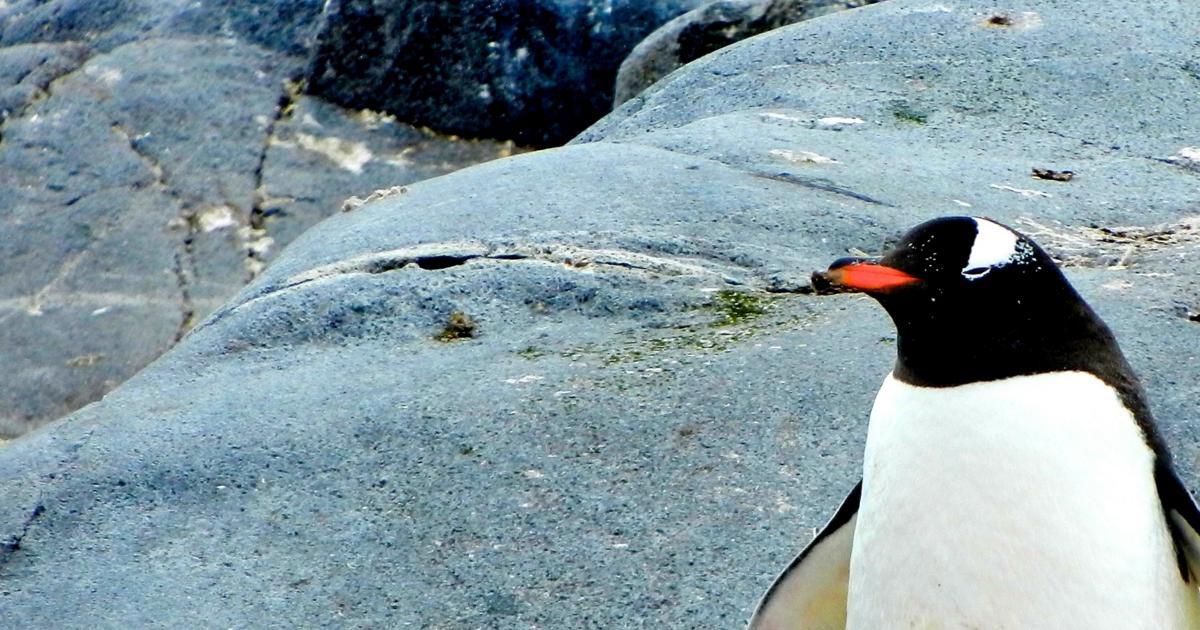 Bist du ein Pinguin in der Wüste?